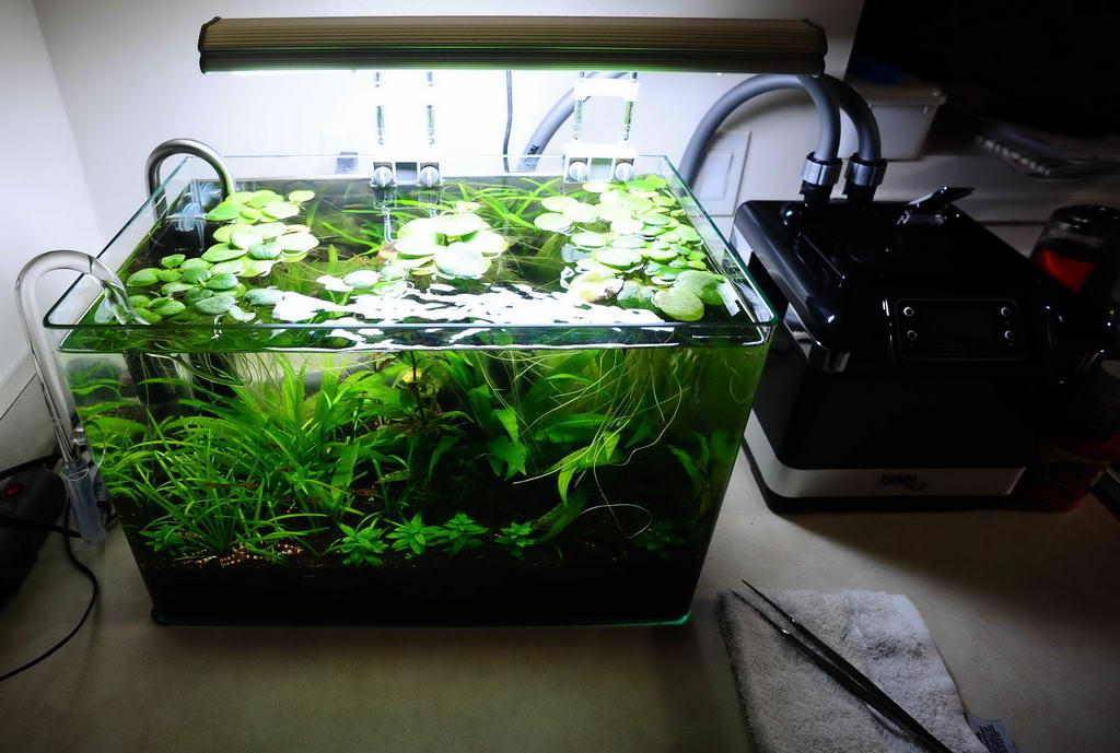 Curved Corner Glass Aquarium 1000 Aquarium Ideas